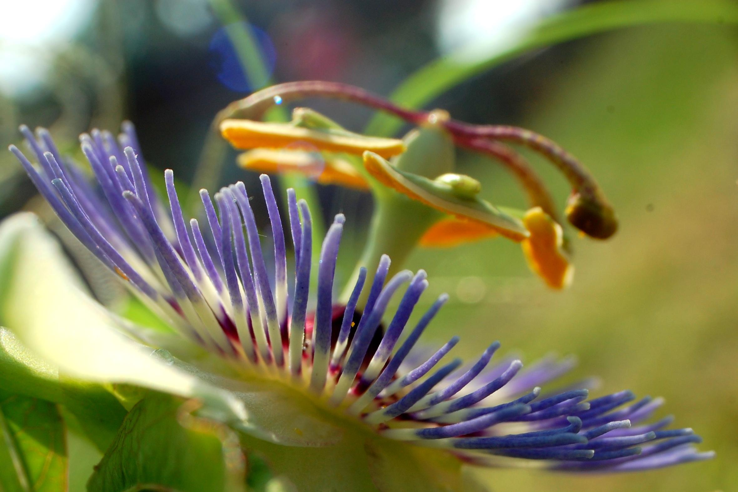 alien flower-1