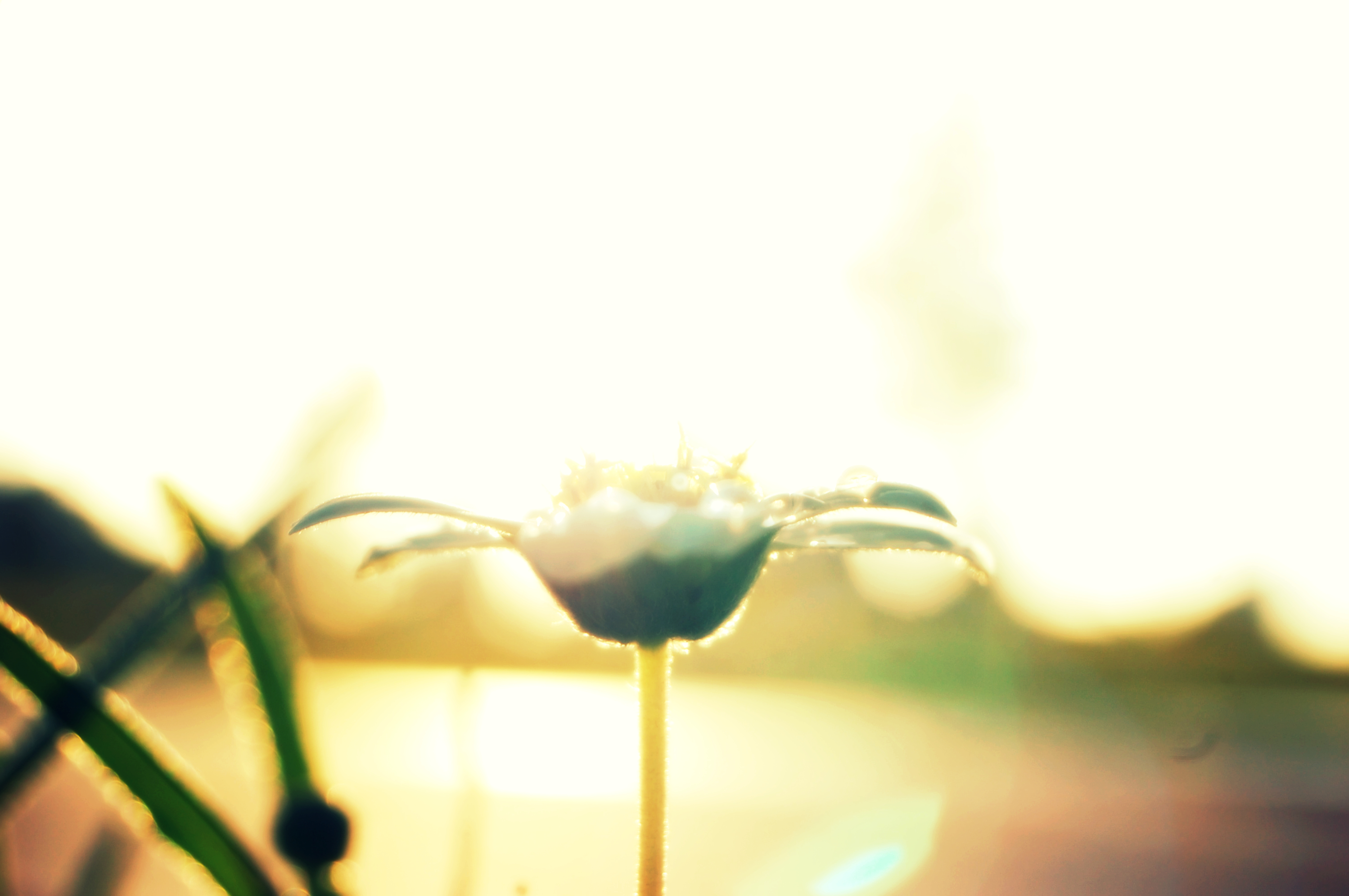 morning bloom-1