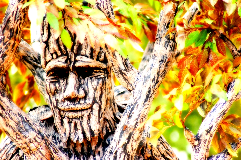 tree of life-2