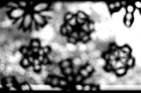 snowflakes-1