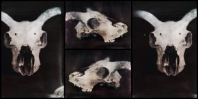 tintype skull